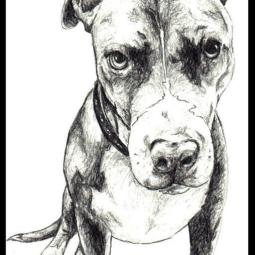 5x7 graphite drawing